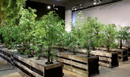 Sharetrade Delivers Artificial Plants to the Hong Kong Customer