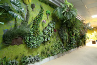 Installation Technology of Plant Walls