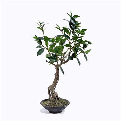 Artificial Bay Laurus Tree, With Ceramic Pots
