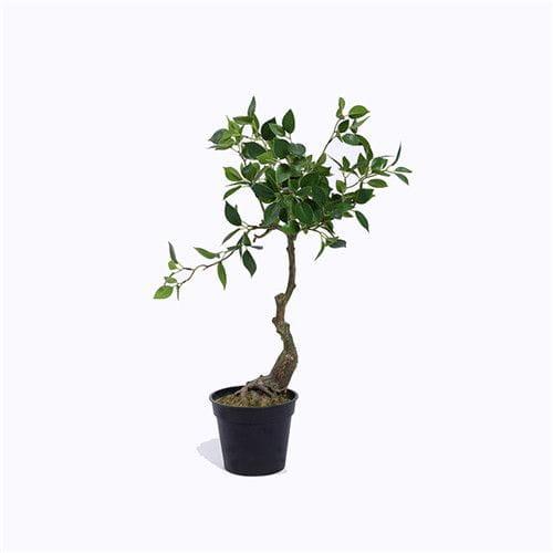 Plastic Cedrela Bonsai, Small Leaf
