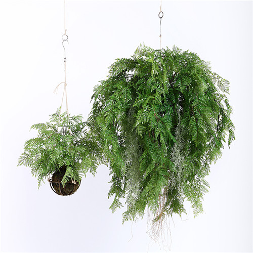 artificial hanging ferns manufacturer in china - sharetrade