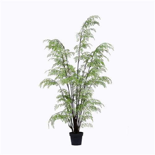 Plastic Ferns