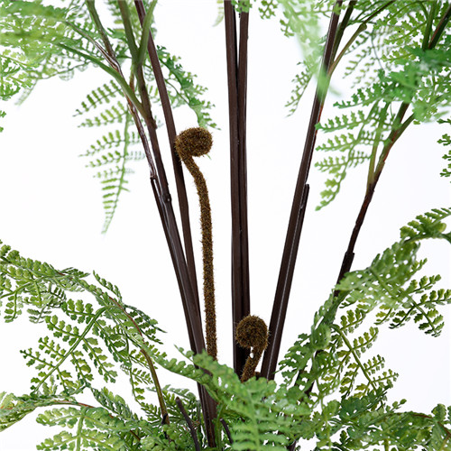 Silk Fern Plants