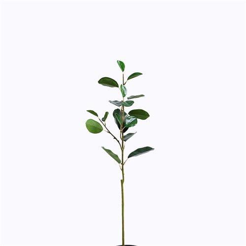 Plastic Ficus Microcarpa Foliage