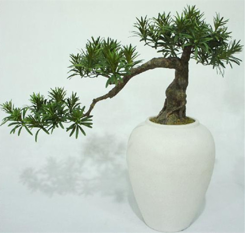 Artificial Podocarpus Bonsai Tree