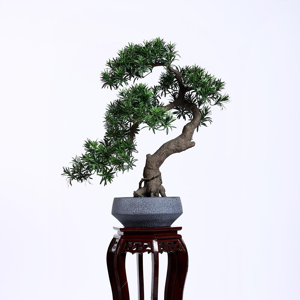 Faux Podocarpus Bonsai