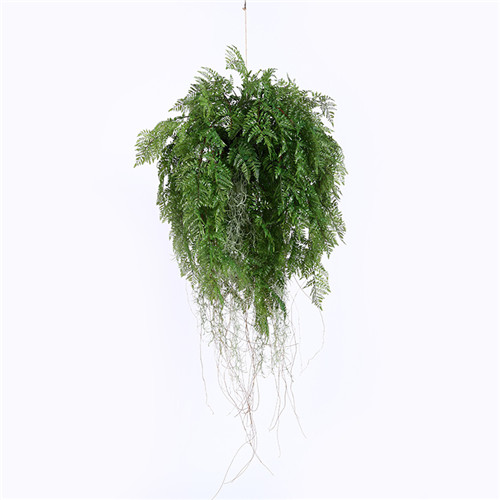 Plastic Hanging Ferns